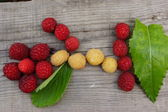 The composition of the ripe and juicy berries of raspberry — Stok fotoğraf