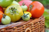 Colorful and different size tomatoes — Stock Photo