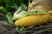 Rural composition with peas, corn and a straw hat — Stock Photo
