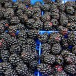 Blackberries — Stockfoto