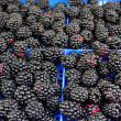 Blackberries — Stock fotografie