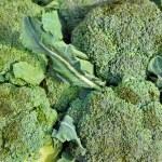 Broccoli Sprout Heap Vegetable Background XXXL — Stock Photo #33341351