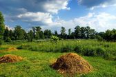 Hay on the Summer Meadow — Stock Photo