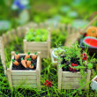 Miniature Garden — Stock Photo