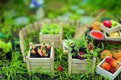 Miniature Garden — Stock Photo