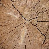 Woodpile of cut Lumber — ストック写真