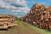Woodpile of cut Lumber — Stock Photo