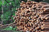 Industrial logging — ストック写真