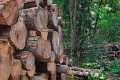 Industrial logging — Stockfoto