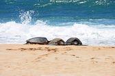 три черепахи в песок просто из воды — Стоковое фото