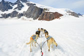 Dog sled competition — Stock Photo