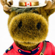 Royal Canadian Mounted Police Moose Soft Toy — Stock Photo