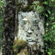 Face sculpted in a tree — Stock Photo