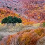 Colores de otoño en el bosque. Montseny. — Stock Photo