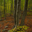 Arbol en bosque principios de Otoño — Stock Photo #29368323