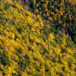 Vista de bosque amarillo y verde. Montseny. — Stock Photo