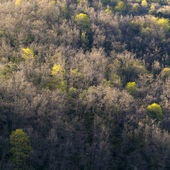 Forest in early Spring. La Garrotxa. — Stock Photo