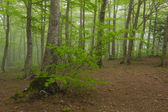 Heart drawn in a tree in forest with fog. Montseny. — Stock Photo