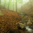 Fog, creek and forest. — Stock Photo