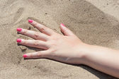 Female palm on the sand — Stock Photo