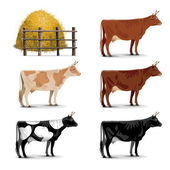 Vector Cow Icons — Stock Vector