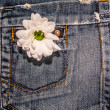 Background, texture, jeans pocket and daisy — Stock Photo