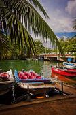A pier in Jungle in Sri Lanka — Stock Photo