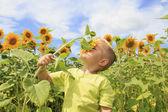 Field of bright sunflowers — Stock Photo