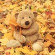 Toy teddy bear in the park  — Zdjęcie stockowe