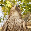 Stock Photo: Field Eagle looks forward to visitors in park
