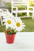 Bright daisies stand in a bucket — Stock Photo