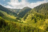 потрясающе горный пейзаж с деревьями — Стоковое фото