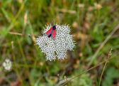 Borboleta vermelha em uma flor — Fotografia Stock