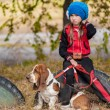 Basset hound — Stock Photo #35862249
