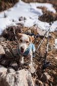 Eal dog — Stock Photo