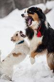 Funny pes hrát ve sněhu — Stock fotografie