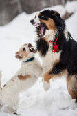 Funny dog playing in the snow — Stok fotoğraf