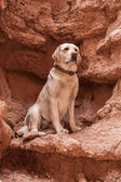 Dog in nature looks into the distance — Stockfoto