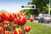 Tulips and city street — Stock Photo