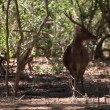 The deer inclines the head to the earth. — Stock Video
