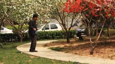 男の朝練習公園桜の木 — ストックビデオ
