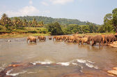 Group of elephants in the river. — Stock Photo