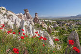 Spring Cappadocia Poppy — Stock Photo