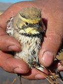 Kruchy natura ptak ręka — Zdjęcie stockowe