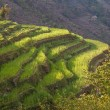 Stock fotografie: Spring Rice Terraces Sunrise