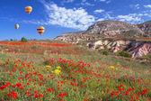 Spring Poppy Field Balloons — Stok fotoğraf