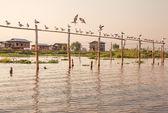 инле озеро птицы чайка — Стоковое фото