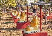 Sitting Buddha Statues Tree — Stok fotoğraf