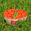 Rowan berry. — Stock Photo