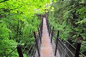 Suspension bridge. — Stock Photo